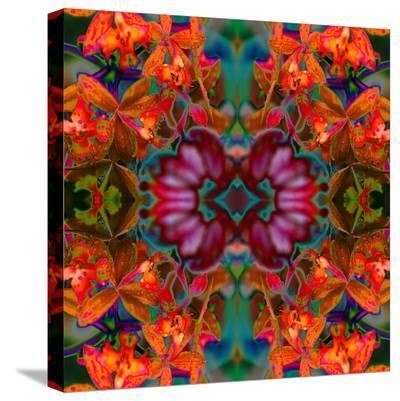 Yellow Orchids 2-Rose Anne Colavito-Stretched Canvas Print