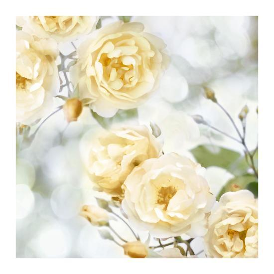 Yellow Rose Garden I-Joanna Lane-Giclee Print