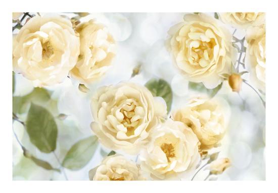 Yellow Rose Garden III-Joanna Lane-Giclee Print