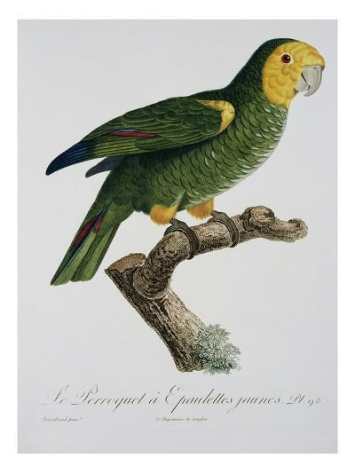 Yellow-Shouldered Parrot-Jacques Barraband-Premium Giclee Print