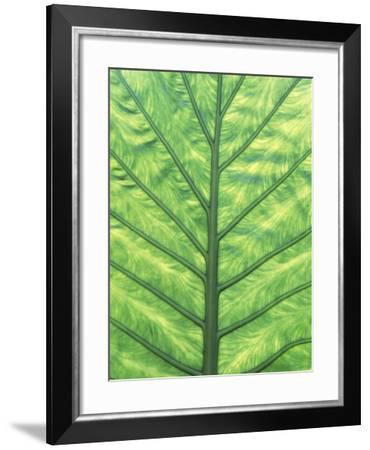 Yellow Skunk Cabbage (Lysichitum Americanum) Leaf Pattern, British Columbia, Canada.-Chris Cheadle-Framed Photographic Print