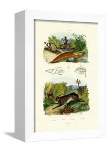 Yellow Slug, 1833-39