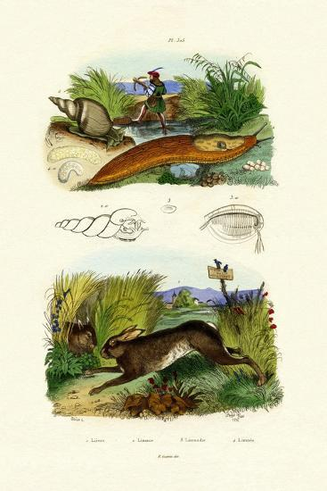 Yellow Slug, 1833-39--Giclee Print