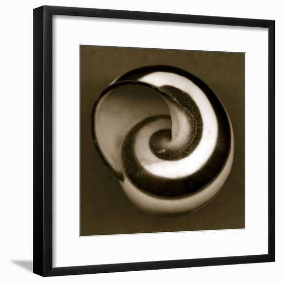 Yellow Tail Snail-John Kuss-Framed Photographic Print