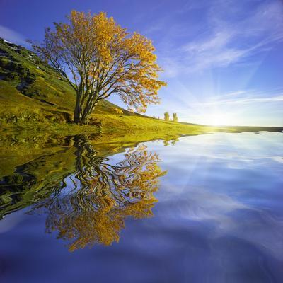 https://imgc.artprintimages.com/img/print/yellow-tree-reflection_u-l-q10plqk0.jpg?p=0