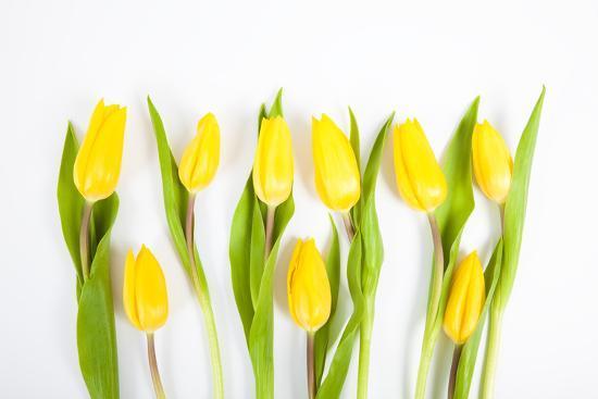 Yellow Tulips-Frank Lukasseck-Photographic Print