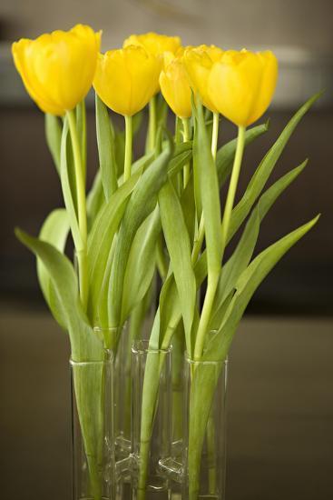 Yellow Tulips-Karyn Millet-Photographic Print