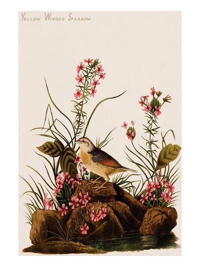 Yellow Winged Sparrow-John James Audubon-Art Print