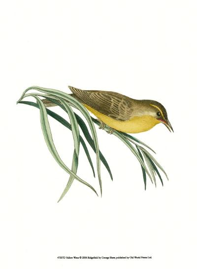 Yellow Wren-George Shaw-Art Print