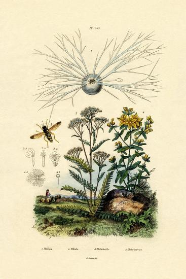 Yellowjacket Hoover Fly, 1833-39--Giclee Print