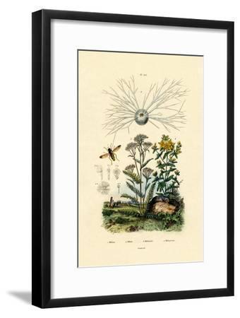 Yellowjacket Hoover Fly, 1833-39