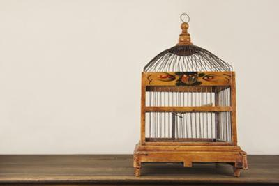 Bird Cage on Wooden Shelf by YellowPaul