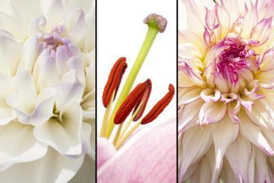 Collage of Flowers in Lila White by YellowPaul