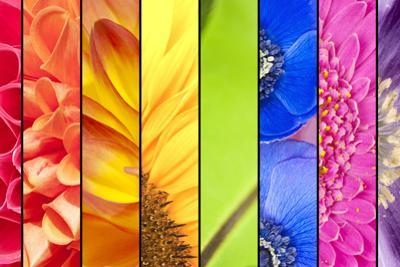 Collage of Flowers in Rainbow Colors by YellowPaul