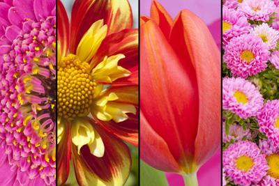 Collage of Red Yellow and Pink Flowers by YellowPaul