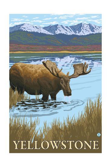 Yellowstone, Montana - Moose Drinking-Lantern Press-Art Print