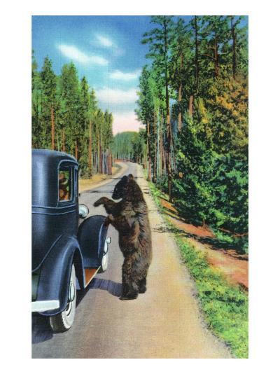 Yellowstone Nat'l Park, Wyoming - Bear Begging by a Car-Lantern Press-Art Print