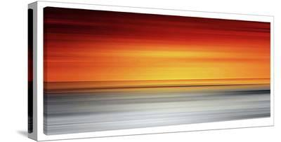 Yellowtail-Sven Pfrommer-Gallery Wrapped Canvas