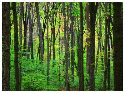 Yellowwood State Forest, Indiana, USA-Anna Miller-Photographic Print