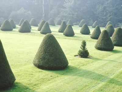 Yew Topiary Parnham House, Dorset-Jacqui Hurst-Photographic Print