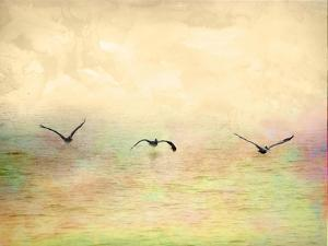 Seagulls in the Sky I by Ynon Mabat