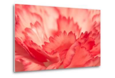 Pink Carnation Flower Petals