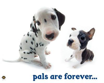 Pals Are Forever