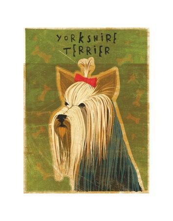 https://imgc.artprintimages.com/img/print/yorkshire-terrier_u-l-f1vduw0.jpg?p=0