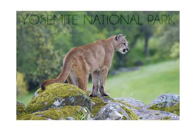 Yosemite National Park, California - Mountain Lion-Lantern Press-Art Print