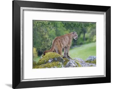 Yosemite National Park, California - Mountain Lion-Lantern Press-Framed Art Print