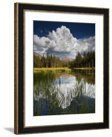 Yosemite National Park, California: Pond Along Entrance Gate at Tioga Pass and Tuolumne Meadows.-Ian Shive-Framed Photographic Print