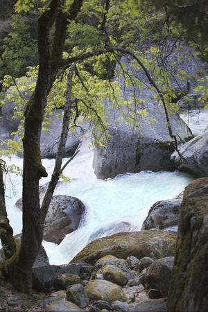 Yosemite National Park, Wyoming, USA. Intimate River Scene-Janet Muir-Photographic Print