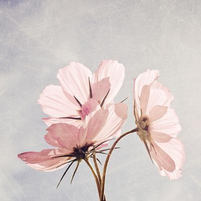 https://imgc.artprintimages.com/img/print/you-are-my-pink-sunshine_u-l-pz0bwy0.jpg?p=0
