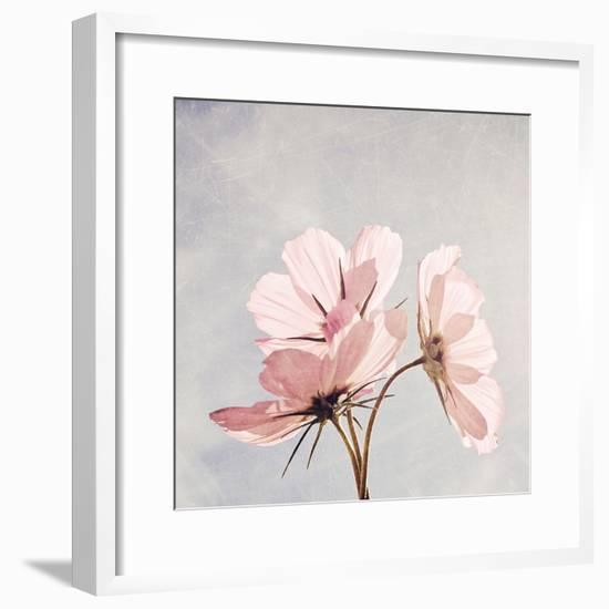 You Are My Pink Sunshine-Susannah Tucker-Framed Photographic Print
