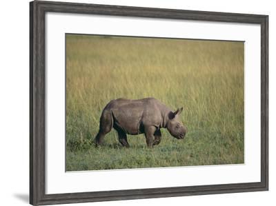 Young Black Rhinoceros-DLILLC-Framed Photographic Print