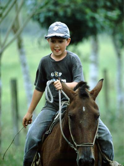 Young Boy Riding Bay Horse and Herding Cattle, Guapiles, Costa Rica-Cindy Miller Hopkins-Photographic Print