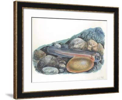 Young Brown Trout Salmo Trutta--Framed Giclee Print