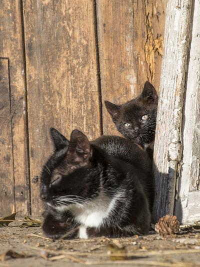 Young Cat with Mother-Andrea Haase-Photographic Print