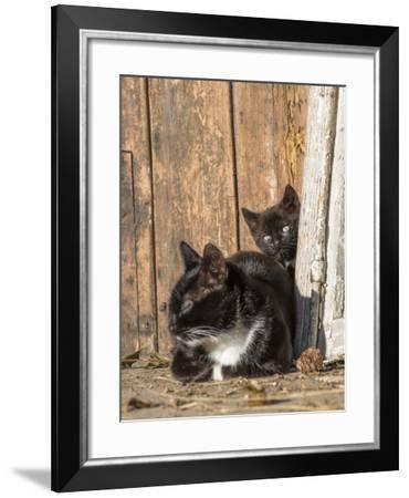 Young Cat with Mother-Andrea Haase-Framed Photographic Print