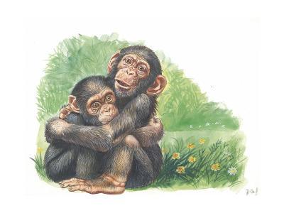 Young Chimpanzees Pan Troglodytes Playing--Giclee Print