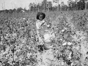 Young Cotton Picker