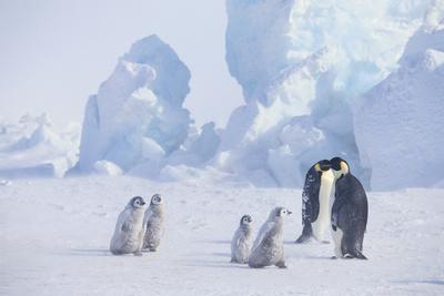 https://imgc.artprintimages.com/img/print/young-emperor-penguins-and-adult_u-l-pzrdp80.jpg?p=0