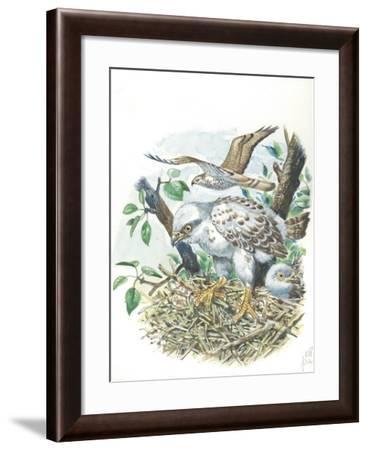 Young European Honey Buzzards Pernis Apivorus in Nest--Framed Giclee Print