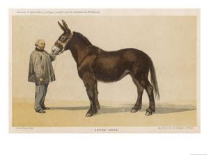 Young French Mule with Its Owner Monsieur Rimbault First Prize at the Niort Competition of 1865