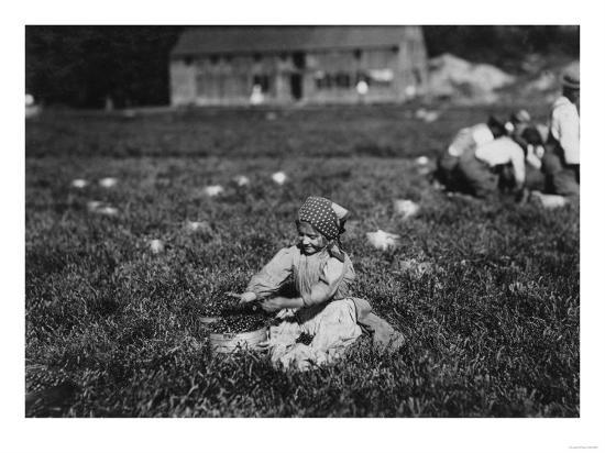 Young Girl Picking Cranberries Photograph - Eldridge Bog, MA-Lantern Press-Art Print