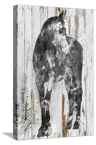 Young Horse--Stretched Canvas Print