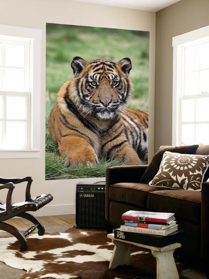 Young Tiger-Tony Burns-Giant Art Print