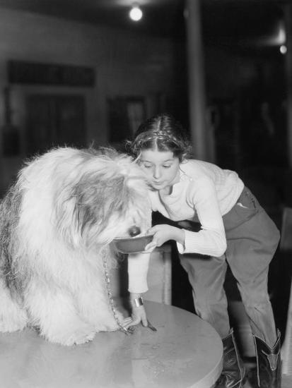Young Woman Offering Her Bearded Collie a Drink of Water--Photo