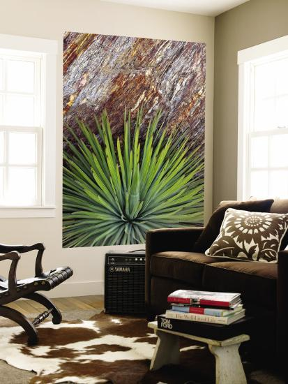 Yucca and Stone-Douglas Steakley-Wall Mural