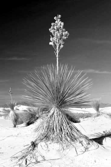 Yucca at White Sands I-Douglas Taylor-Photographic Print
